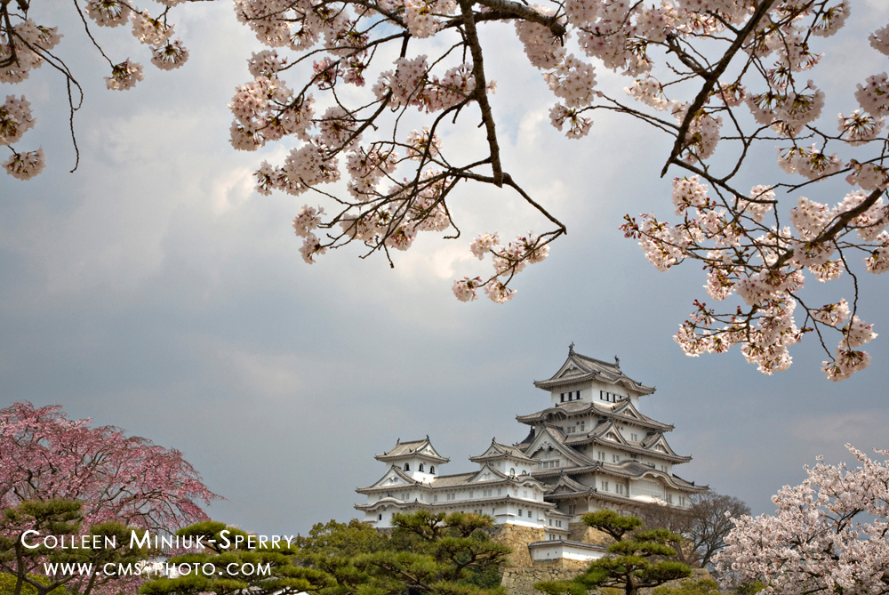 Cherry blossoms frame the Himeji Castle