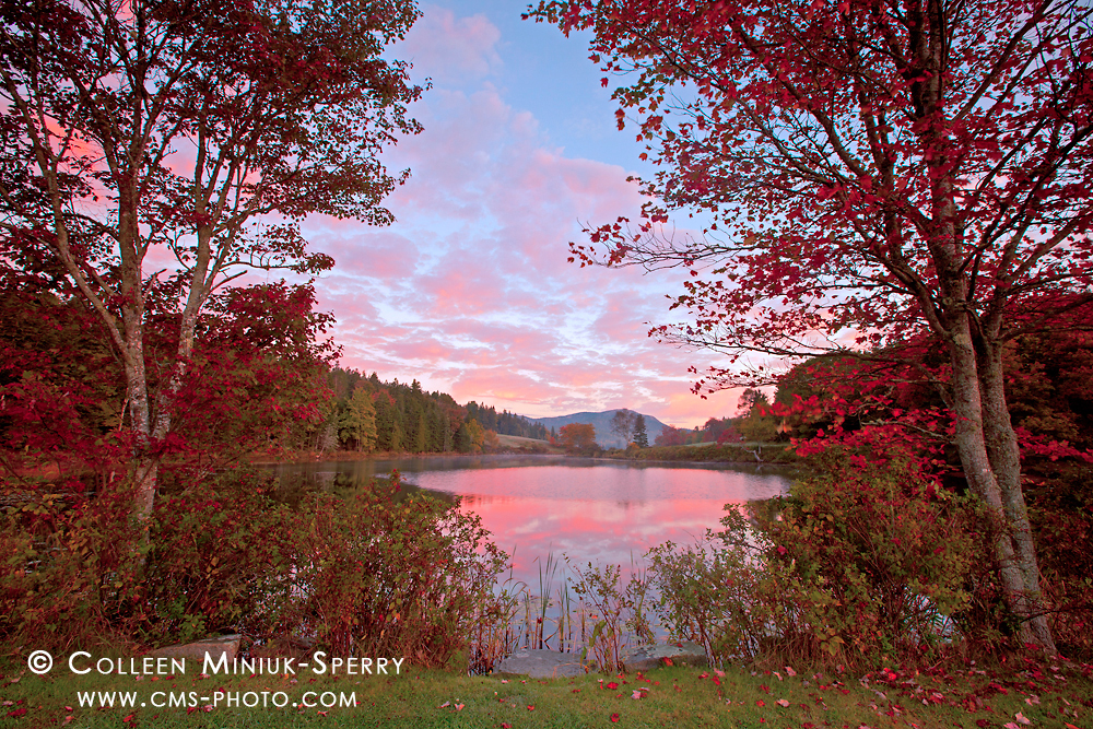 Autumn's Symphony